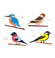 set small birds flat style design vector image