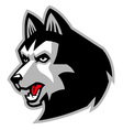 siberian husky dog mascot vector image vector image