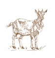 in vintage style goats vector image vector image