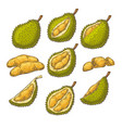 set of icons of a durian vector image vector image