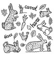 hare hand drawn drawings vector image