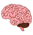 human brain cartoon vector image