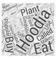 Imitation hoodia gordonii pills Word Cloud Concept vector image vector image