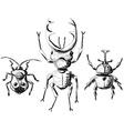 Hand drawn sketch beetles set vector image