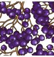 black rowan berries pattern vector image vector image