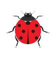 cute ladybug insect beetle vector image