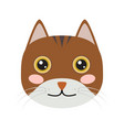 isolated cute cat icon vector image vector image