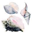 set three watercolor sea shells full color vector image