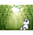 A panda in the bamboo forest vector image vector image