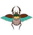 Beetle Scarab vector image