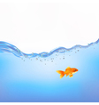 Goldfish In Water vector image vector image