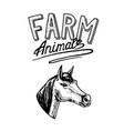 farm animal head of a domestic horse logo vector image