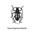 great capricorn beetle drawn vector image vector image