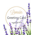 greeting card with lavender flowers and place vector image vector image