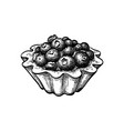ink sketch fruit tart with fresh blueberries vector image vector image