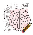 mind brain pencil idea creativity intelligence vector image vector image