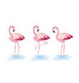set flamingos tropical wild animal vector image vector image