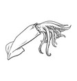 sketch cartoon sea squid isolated vector image