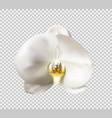 flowers of the orchid white vector image