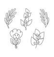 leaf line art vector image vector image