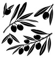 Olive tree branches with olives