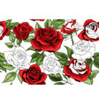 beautiful white outline and colered red roses vector image