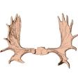 elk antlers vector image vector image