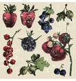 Hand dawn berries