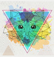 hipster polygonal animal raccoon on artistic vector image vector image