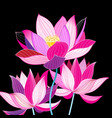 magnificent of beautiful lotuses vector image