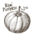 pumpkin logo design template fresh vector image vector image