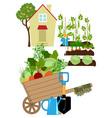 Vegetables garden vector image