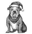 Bulldog with christmas hat vector image