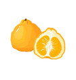 cartoon fresh uglifruit isolated on white vector image vector image