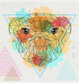hipster polygonal animal bulldog on artistic vector image vector image