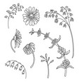 line art set meadow flowers vector image vector image