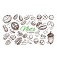 nuts and seeds collection 1 vector image