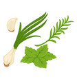 spring greenery with garlic green onion and herbs vector image