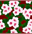 white hibiscus syriacus - rose of sharon on red vector image vector image