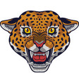 angry leopard head mascot vector image vector image