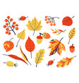 autumn leaves decoration hand drawn elements vector image