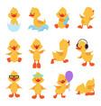 cute chicks cartoon yellow ducks baduck vector image