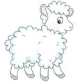 white curly sheep vector image vector image