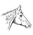 horse head isolated on white background design vector image