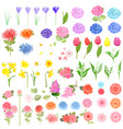 collection of different lovely spring flowers for vector image