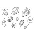 linear set strawberries vector image vector image