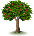 red apple on apple tree vector image vector image