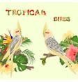 seamless border tropical birds yellow cockatiels vector image vector image
