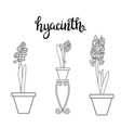 sketch hyacinth spring flowers and lettering vector image