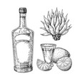 tequila bottle blue agave and shot glass with vector image
